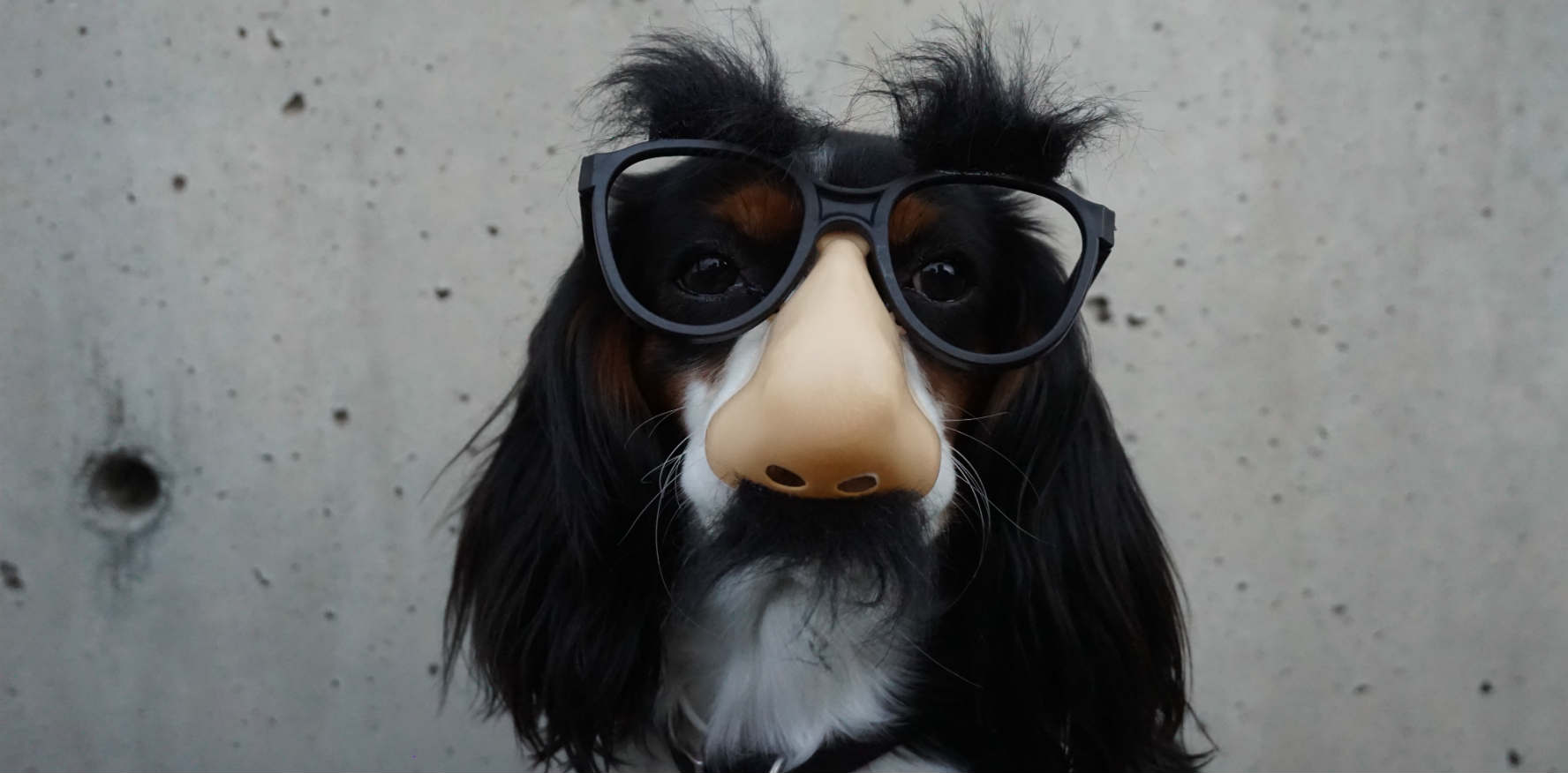 Dog with glasses POS